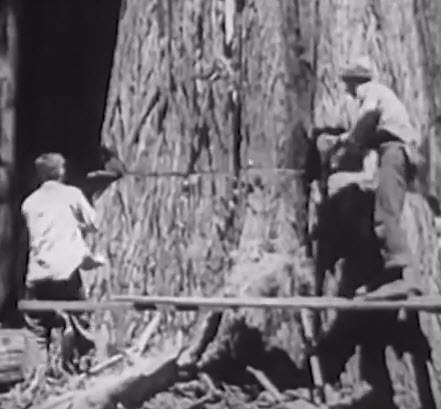 Logging and Sawmill Operations in California – 1940s Forest Documentary
